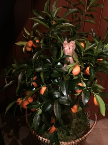 Frankie played in the kumquat plant next to my chair