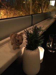 Frankie goes exploring