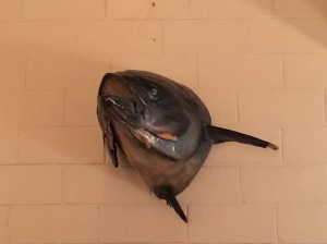 fish head wall decoration