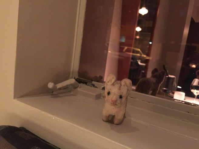 Frankie in the window