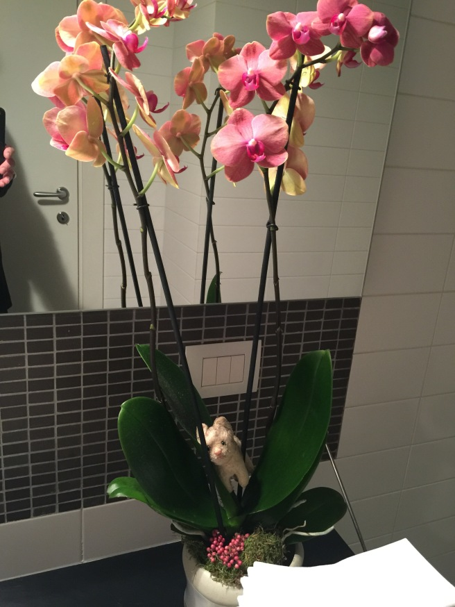 Frankie found an orchid in the bathroom