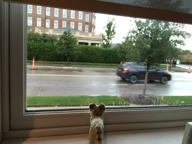 Frankie watched the cars go by at the window by our table