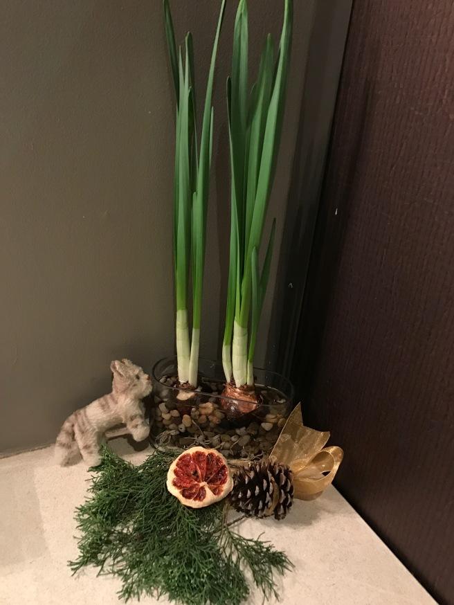 Frankie found some plants