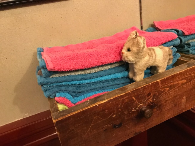 Frankie liked the colored towels