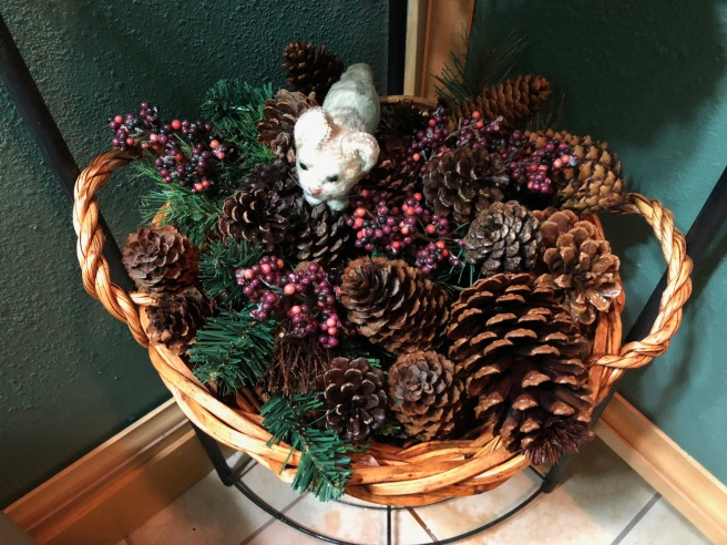 Frankie found a basket of pine cones