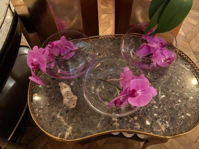 Frnakie found some orchids