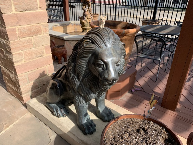 Frankie visited with the lion