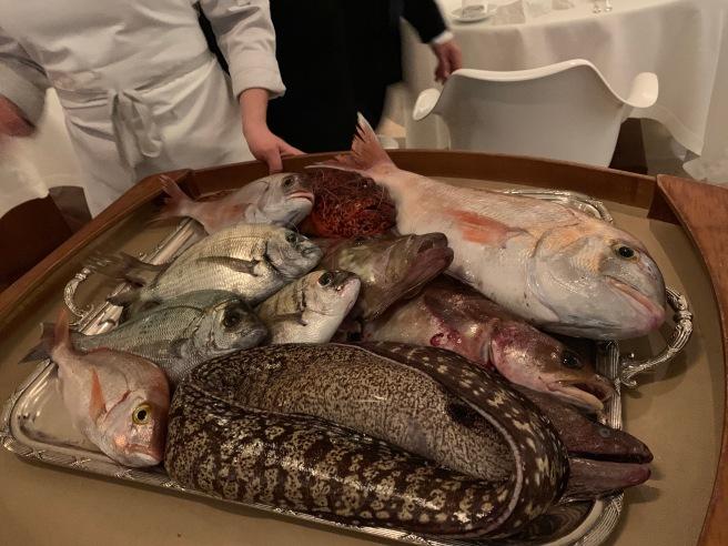 tray of fish
